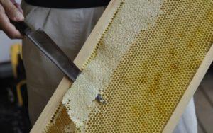 蜜蓋を削ぐ