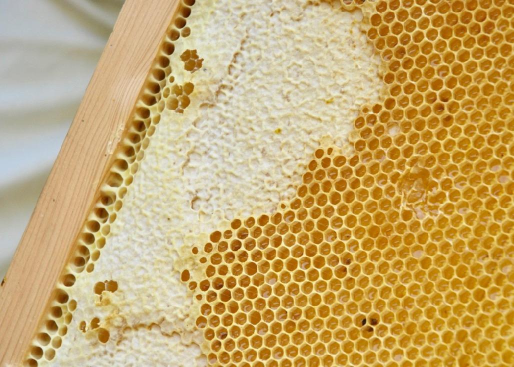 はちみつがつまった蜂の巣