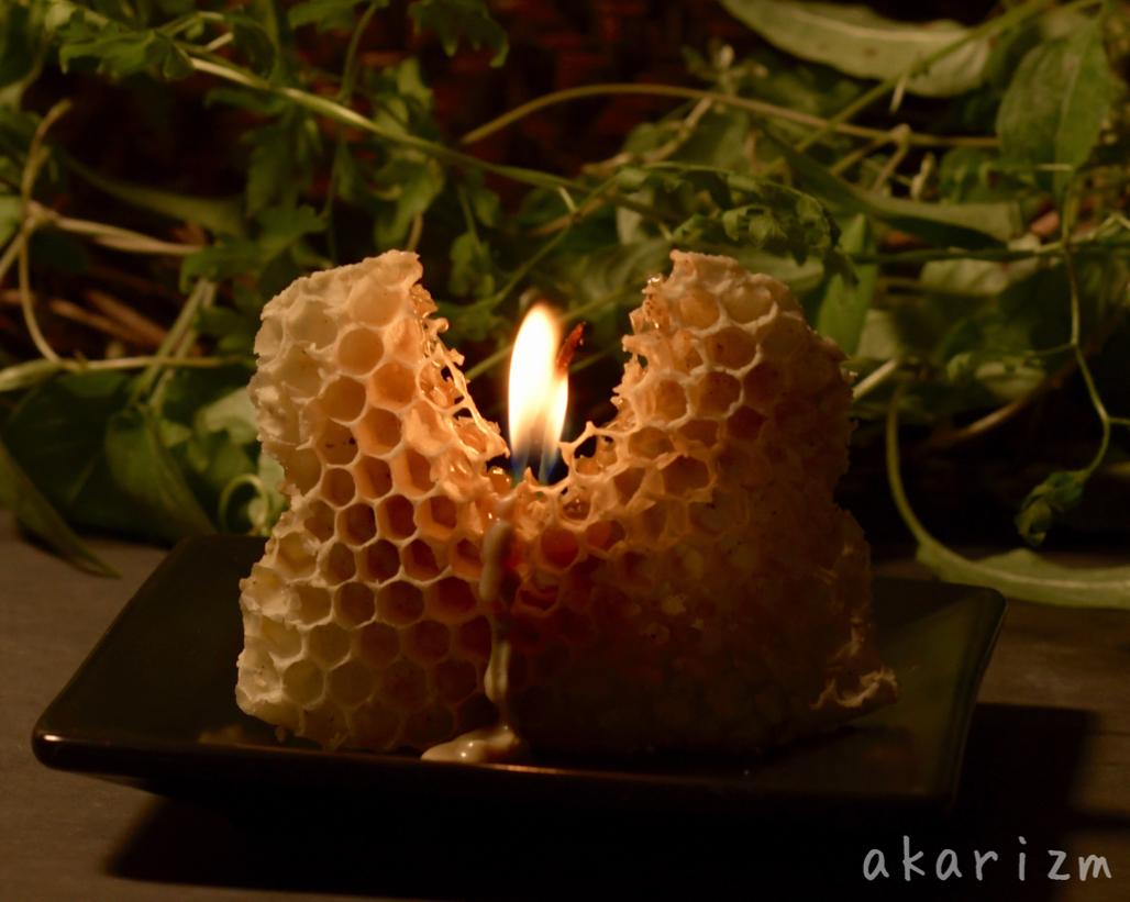 ミツバチの巣そのものの蜜蝋キャンドル